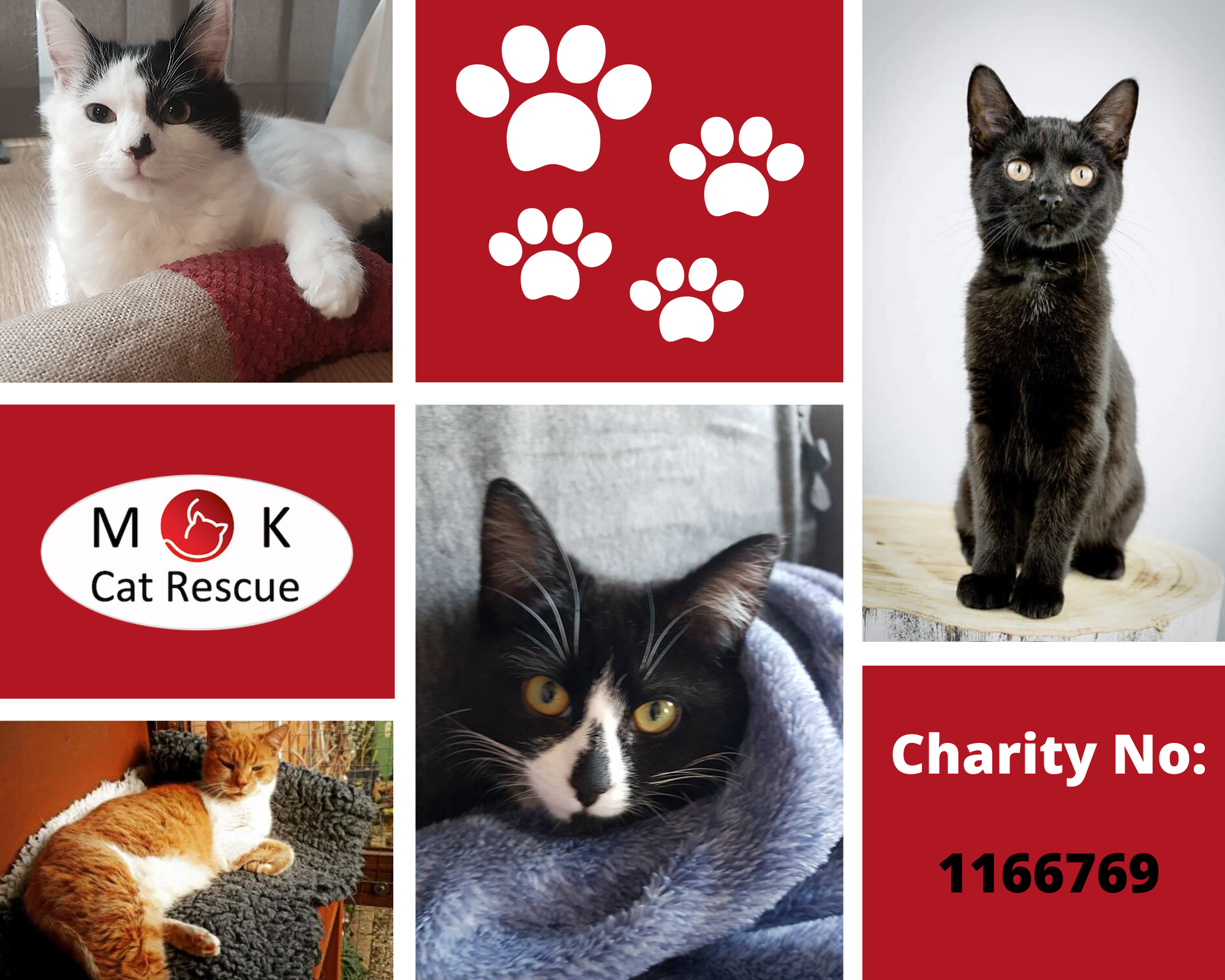 Mk Cat Rescue Passionate About Giving Cats A Second Chance Registered Charity Number 1166769